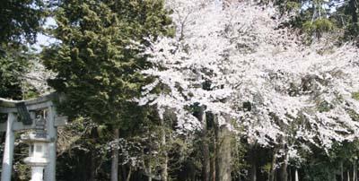 2009_04_06.jpg